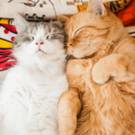 Bringing a Second Cat into the Home: What You Need to Know