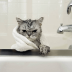 4 Grooming Tips for Your Cat